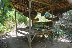 Bamboo (faith_in_the_air) Tags: travel bali nature asia bamboo wanderlust hotsprings nofilter picoftheday thisislife traveltheworld lovetravel amazingworldwild