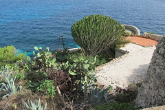 Plants by the sea (Florence3) Tags: plants sicily egadiislands levanza