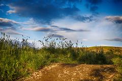 Magical Grass (Manol Z. Manolov) Tags: travel sky color nature rain clouds landscape scenery bulgaria hdr   aytos aitos
