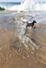 henrique (beckstei) Tags: ocean morning brazil dog praia beach brasil riodejaneiro delete10 delete9 landscape delete5 dawn delete2 waves delete6 delete7 save3 delete8 delete3 delete delete4 save atlantic save1 marica guaratiba carrocho