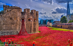 Poppies at Tower of London (DSC00123) (jocelynmifsud) Tags: london publicart ww1 remembrance toweroflondon towerhill londonhdr theshard bloodsweptlandsandseasofred ceramicpoppies poppiesattoweroflondonhdr poppieshdr poppiesattoweroflondon