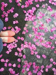 粉 (Zoe.Chen) Tags: sungsang note3 花 interesting 九重葛 taiwan bougainvillea taipei 腳 鞋 flower feet pink 粉紅