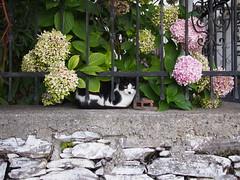 Anatoli (schroettner) Tags: cat greece katze griechenland anatoli kitler