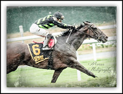 Annecdote (EASY GOER) Tags: horses horse ny sports racetrack race canon track belmont competition racing 7d athletes sporting 56 thoroughbred equine thoroughbreds clement 400mm