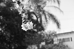 (Ana Caprini) Tags: blackandwhite film analog 35mm vintage iso100 analógica noiretblanc pentax analogue filme pretoebranco pentaxmx vintagecolors anabastoscaprini