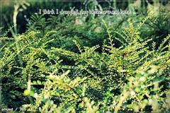 Project/365 #188 (Miguel Puerta) Tags: plants naturaleza green nature canon plantas f14 ideas texto 2014 ef50mm project365 mpuerta