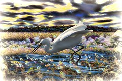 Fishing in the Reed Montage (Rusty Russ) Tags: plum island parker river wildlife reserve bird cloud reed flower colorful day streetart digital graffiti europe mer lago window flickr country landschaft mare analog bright happy la paysage colour eos scenic america cielo market hill world sunset beach water sky red nature blue night white tree green art light sun park landscape summer city yellow people pink house old new photoshop google bing yahoo stumbleupon getty national geographic