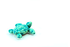 Project 366 - 11/15/2016 - 320/366 (cathy.scola) Tags: project365 project366 odc turtle onwhite teal