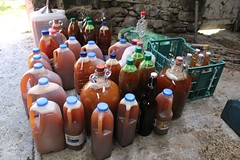 Loads of freshly pressed apple juice (Local Food Initiative) Tags: permaculture apple day apples press pressing cider group sustainable orchard juice fresh pressed