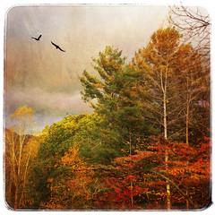 Asheville in Autumn (jeanne.marie.) Tags: mountains onepieceofsky flight flying birds texture iphone5s iphoneography colorful trees treescape leaves elkmountain fall autumn ashevillenc