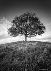 Swinglow (Sarah_Brooks) Tags: swing tree lonetree hill somerset bw mono monochrome blackandwhite trees