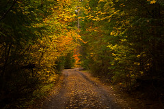 Take the fork in the road (dkuttel) Tags: fallcolors oregon forest mthood