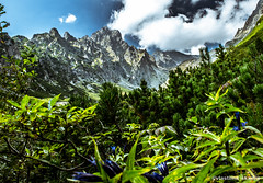 Mountains (vlastimil_skadra) Tags: slovakia europe mountains wild outdoor outdoorlife mountainside nature ngc landscape landscapes clouds hill beautiful beauty brilliant paradise discovery green nikon d3300 picsoftheday photography hobby scenery travel traveling