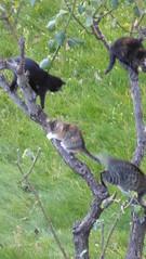 P1270541 (omirou56) Tags: 169ratio panasoniclumixdmctz40 tree cats greece hellas kastoria outdoor green