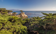 The Lone Cypress (Thilo S.) Tags: 17milesdrive rot california usa landscape mountain lakes creek gras bume grn trees green outdoor wasser landschaft bach wasserlauf hgel reflection sky pfeiffer burns state ark blue sea deep highway no 1 one coast pacific ocean meer mile