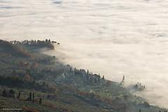 Mist (Massimo_Discepoli) Tags: mist fog nebbia assisi subasio alberi trees italy italia umbria