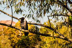Bird on tree (joe petruz) Tags: bird tree nature canon eos 650d petruz leaf autumn yellow colour green capture shoot city park day sun branch life torino italy piemonte