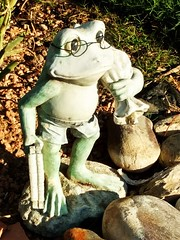 HGGT! GORGEOUS GREEN FROG THURSDAY! (Visual Images1) Tags: frog hggt gorgeousgreenthursday