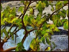 *Mulberry tree... (MONKEY50) Tags: tree art digital pentaxart green brown yellow colors fall leaf plant hypothetical awardtree shockofthenew flickraward musictomyeyes autofocus greenscene exoticimage netartii artdigital pentaxflickraward soe contactgroups beautifulphoto nature