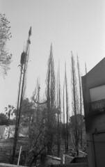 exakta_vx_kodak_triX_400_haifa_fire_26_nov_2016_027 (avitalnatanson) Tags: exakta fire damage kodak trix arson terror haifa carmel