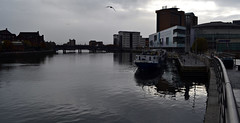 dull ..and OK for it, I think (conall..) Tags: lagan still river belfast reflection dull cloudy titanic quarter gulls lines reflections bright bird gull midair inflight