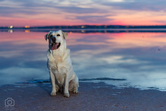 EOS 700D_3474 (mecagoenvalve) Tags: dog saltlake sky nature sunset blue canon fun torrevieja spain goodboy