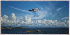 (407/16) Libertad II (Pablo Arias) Tags: pabloarias photoshop nxd cielo nubes españa gaviota mar agua océano ogrove pontevedra comunidadgallega