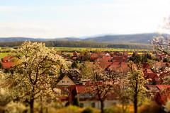 Mrchenwelt ... (sensorpunkt.de) Tags: stapelburg miniaturwelt mrchen ort harz kirschblte blte bume baum sensorpunktde