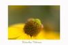 Lensbaby Velvet 56 (Janny.K) Tags: zoomnl lensbabymacro photofacts flickrtoday canonphotography lensbabyoncanon lensbabies lensbabieschallenge ilovenature lensbabyvelvet56 canon6d lensbabyflowers flowers