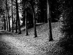 Autumn/Herfst 2016 (Nico_1962) Tags: trees bomen zwolle nederland autumn fall herfst leica m8 summitar 50mm ltm m39 rangefinder primelens zonefocussing vintagelens manualfocus thenetherlands dof bw zwartwit