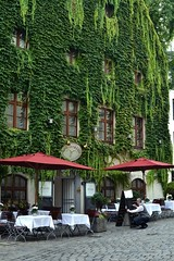 2016-10-14: Today's Specials At The Vine Covered House (psyxjaw) Tags: germany munich munchen trip october holiday pub bar brewery beer building covered vines tree man chalkboard waistcoat kneeling writing