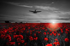 POP0018 (Smart Aviation Art) Tags: poppy poppies poppyfield poppyfields lancaster vulcan avro spitfire hurricane aircraft military bbmf