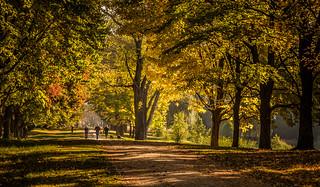 Ambling through Autumn