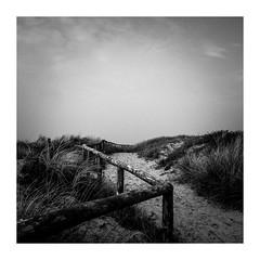 ...... (seba0815) Tags: ricohgrdiv grd monochrome walk nature bw sky shadow sun fence water sea northsea northholland dunes blackwhite blackwhitephotos blanco nero blanc noitrr autumn square seba0815