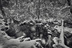 Pond Creek (2), 2016.11.20 (Aaron Glenn Campbell) Tags: mannygordon recreationsite pinchotstateforest thornhursttownship lackawannacounty nepa pennsylvania textures snowfall snow bw blackandwhite tint toning reflections wintry trees outdoors nature 3xp 2ev macphun aurorahdr2017 google nikcollection sony a6000 ilce6000 mirrorless rokinon 12mmf2ncs wideangle primelens manualfocus emount