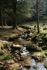 dartmoor stream (KelJB) Tags: trees beauty nature green water streams countryside walks woodland woods moors dartmoor