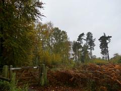 Autumn Colours (Triker-Sticks) Tags: trees nature leaves autumn thelodge rspb reserve england sandy