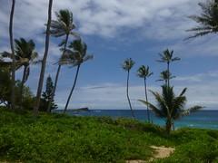 Earth sea and sky (enjbe) Tags: hawaii earth sea sky ocean palms trees track sand cloud makapuu