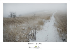 White Trail (DKNC) Tags: northcarolina nc winter snow balds fog trail appalachiantrail daleking