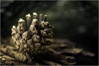 Macro Mondays - Beatles/Beetles - Norwegian Wood (This Bird Has Flown)