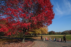 Toddlers on a Rope (CVerwaal) Tags: autumn centralpark greatlawn newyork ny usa children toddlers trees sonyrx100iii
