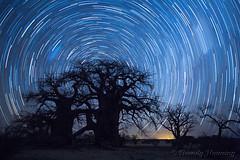 12-Botswana_2016 (Beverly Houwing) Tags: africa botswana desert islandoflostbaobabs kalahari mgadikgadipans saltpan night astrophotograhy sky stars milkyway galaxy longexposure startrail wideangle silhouette tree baobab