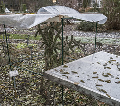 Erster Frost - 0033_Web (berni.radke) Tags: ersterfrost frost raureif wassertropfen rime eisblumen eiskristalle iceflowers icecrystals escarcha