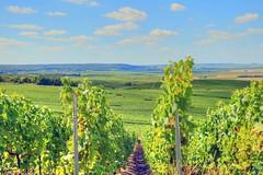 VERZENAY (gabard.nadege) Tags: verzenay vignes fin dété champagne marne reims