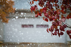 first snow! (severalsnakes) Tags: ks2 m13535 missouri pentax saraspaedy sedalia manual manualfocus rain snow weather winter