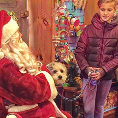 Their picture with Santa... (Renee Rendler-Kaplan) Tags: oops iamthedogwhisperer suchacutepuppy theirpicturewithsanta indoors inside chaletnurseryandlandscape november 2016 girl younglady stranger santa santaclaus sit seated sitting standing leashed lookingatme christmas decorations decor free takeyourownphotos iphone iphoneography reneerendlerkaplan pet dog chicagoist chicagoreader wilmette consumerist wbez northshore suburb yesheissmilingatme people littledoglaughedstories