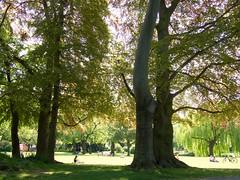 Maisonne II - Maschpark (mikehaui60) Tags: olympuspenepm2 pen epm2 mft maisonne mai hannover maschpark trees sunbathing relaxing lowersaxony germany