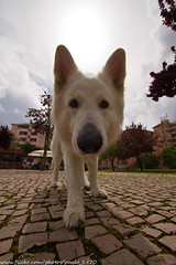 Dog (paulo_1970) Tags: dog co canon 7d 1022mm f3545 canon1022mmf3545 canon7d paulo1970
