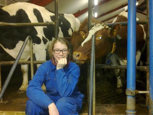mjölkgård