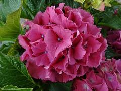 """Flowers are happy things."" (AvQuu) Tags: excellentsflowers flickrflorescloseupmacros faunayfloradelmundo flickrsportal esenciadelanaturaleza"